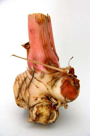 pflanze wurzel: Betriebswurzel in der Ingwerfamilie
