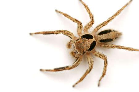 Macro shot of spider on white wall photo