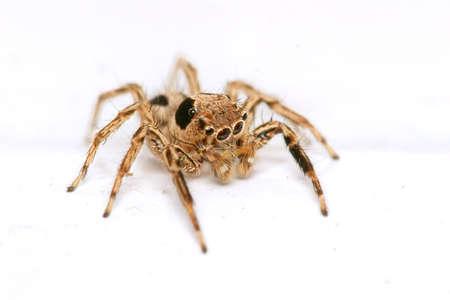 Macro shot of small spider photo