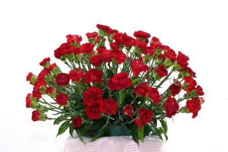 velvety: Bouquet of dark velvety carnations Stock Photo