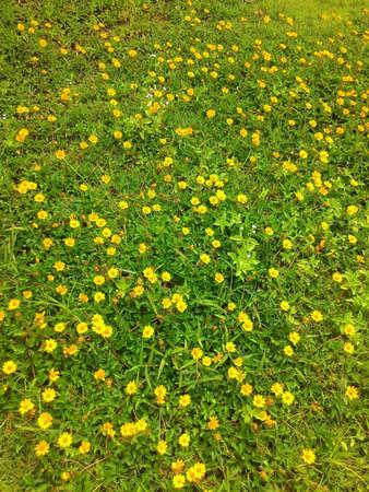 graden: Flower graden