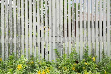 White wooden fence with plant in daytime. Banque d'images - 122266094