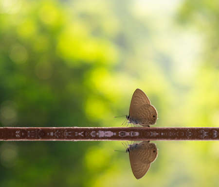 Butterfly on nature bokeh background with water reflection. 免版税图像