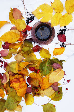 cup: cup of tea surrounded by autumn leaves.