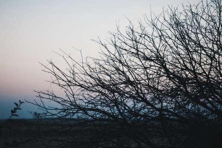 sky brunch: Tree on a background of a sunset. Brunches backlight orange sunrise sky. Leafless tree on sunset background near lake. Tree brunch against sunset sky background Stock Photo
