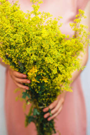 Wildflower: young woman in a rosy dress holding a bunch of colorful picked wild flowers in her hands. Young woman with bouquet of wild flowers. Detail of womans hands holding wildflower bouquet