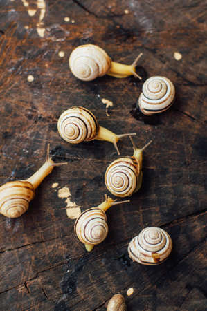 ul: Yellow snails walking around the garden. Snail on the tree in the garden. Snail gliding on the wet wooden texture. snail Catch the stump,snail,beautif ul snail,snail on the wood,single snail Stock Photo