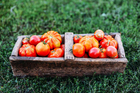 Assorted tomatoes in brown paper bags. Various tomatoes in bowl. Still life of different types of tomatoes. cherry tomatoes being washed in a colandar Stock Photo