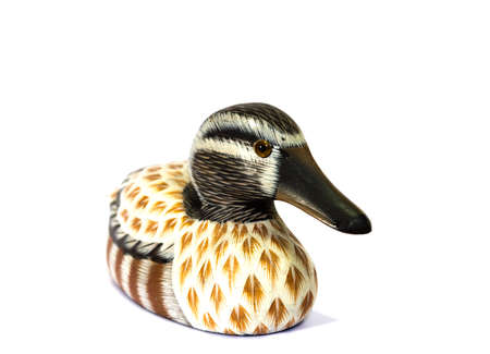 dabbling: teal duck model isolate background