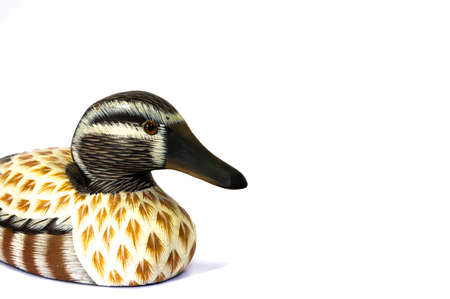 hunted: teal duck model isolate background