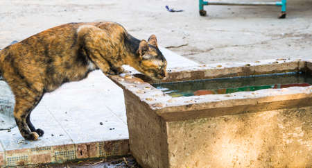 repackaged: cat hunting and drinking Stock Photo