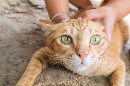 cease: prendere il mio gatto nel mio giardino Archivio Fotografico