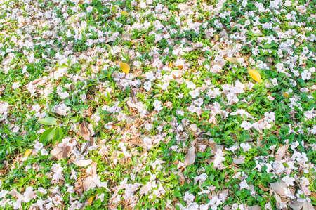 flower  dropped in the garden
