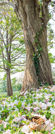 agricultural essence: big tree in the jungle
