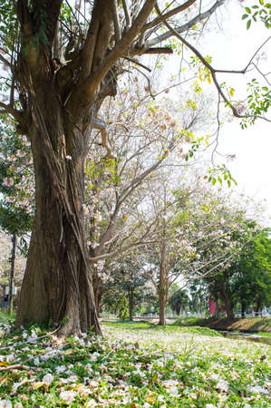 minutiae: vine plant on big tree