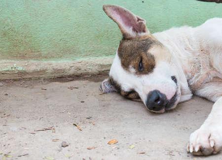 waxes: dog sleeping he is waking