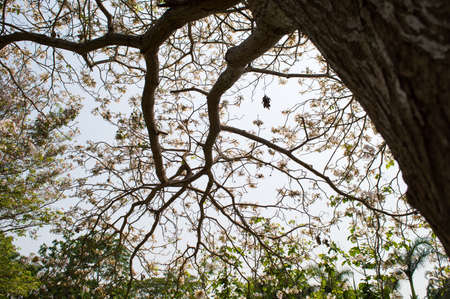dry wood tree spring in thailand photo