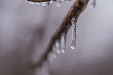 A drop of water frozen on a tree limb