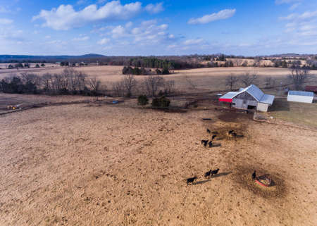 Aerial view of a barn with cowsn Stock Photo