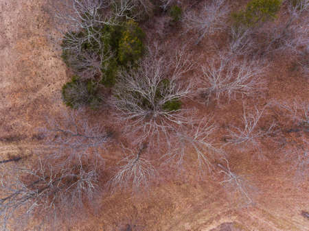 Aerial view of barren trees during winter