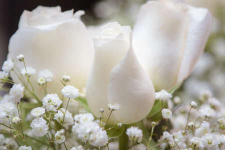 Bouquet of white roses and babys breath up close Stock Photo