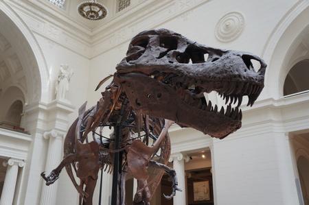 paleontologist: Head shot of dinosaur tyrannosaurus rex t-rex Editorial