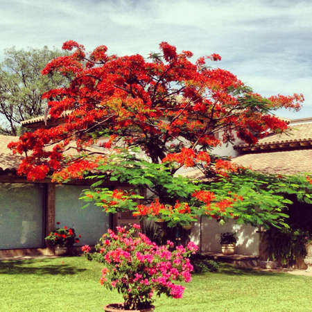 Nice spring tree