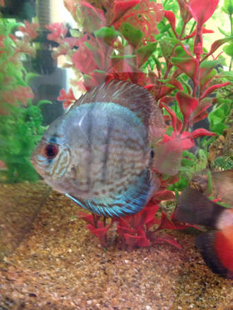 fish inside an aquarium