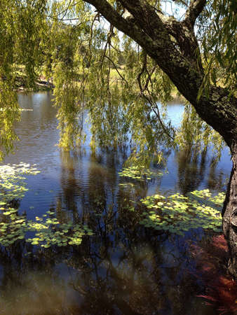 Tree on small lake