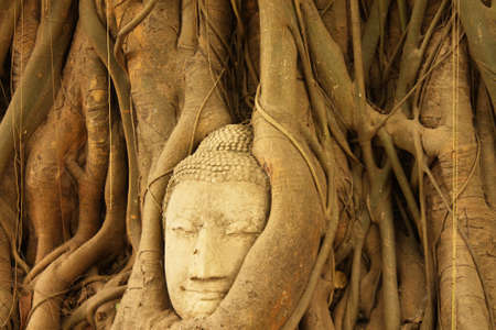 Some part of Buddha Statue in Root of Tree in Wat Phra Si Rattana Mahathat Temple, Ayutthaya Thailand photo
