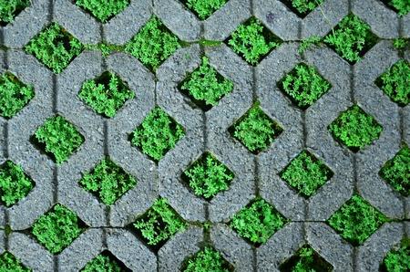 empedrado: Bloque de ladrillo con la hierba.