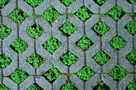 paving stone: Brick block with grass.
