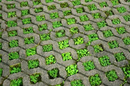 paved: Brick block with grass.