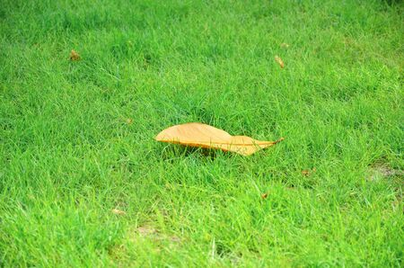 Leaf on grass. photo