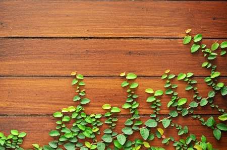 Leaf plant over wood wall.