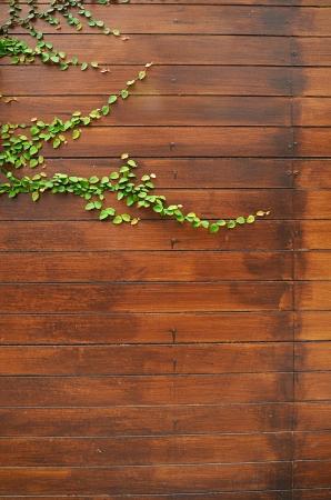 Leaf plant over wood wall.