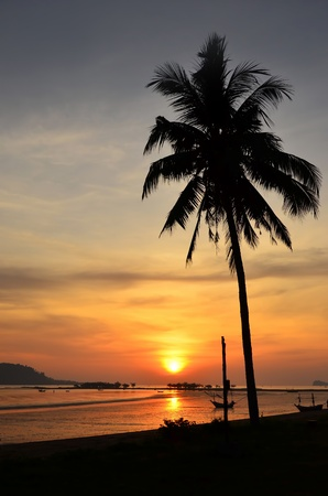 Sunset at the beach with coconut tree. photo