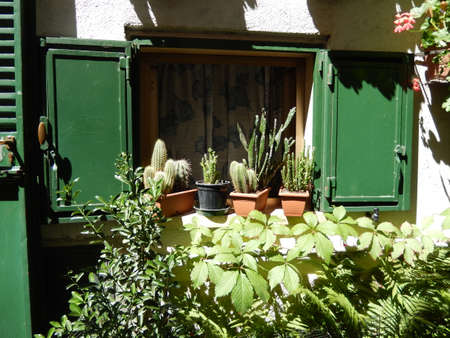 onion valley: Little window with plants Stock Photo