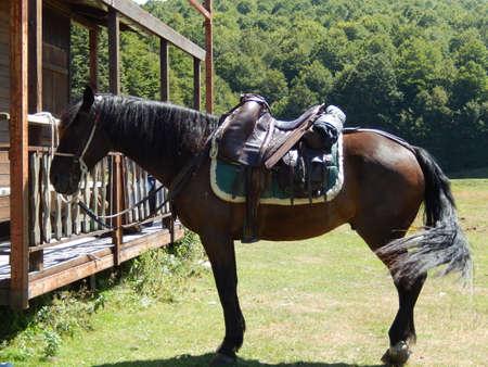 abruzzo: Horses in Abruzzo