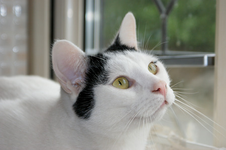 Pet cat gazing lovingly into owners eyes