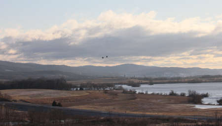 mangement: A pair of Canada geese fly over lake & fields at Middle Creek Wildlife Mangement Area, PA, USA.