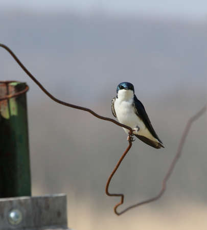 Songbird perched on a crooked wire fence.