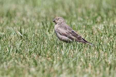 beak: Blinking songbird with damaged beak. Stock Photo