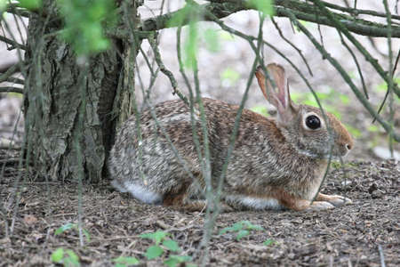 under a tree: Alert rabbit crouching under a tree. Stock Photo