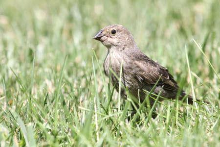 beak: Songbird with damaged beak.