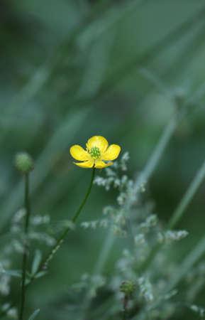 Tiny wildflower. Banco de Imagens