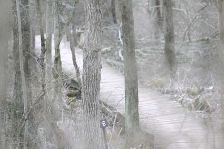 haunt: Wooden boardwalk in the forest. Stock Photo