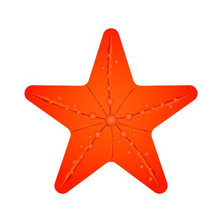 Orange perfect sea star that can be found on the ocean floor. Isolated vector illustration