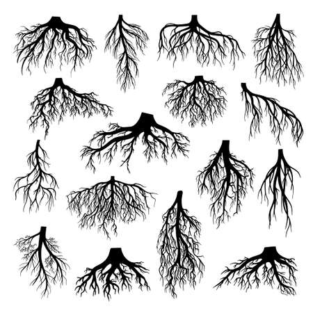Roots of tree, bushes, shrubs black silhouettes set. Rootstock, rhizoma, creeping underground stem. 일러스트