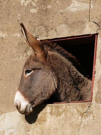 donkey Stock Photo - 17097075